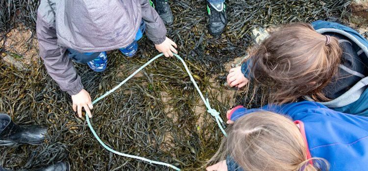 Identification des algues